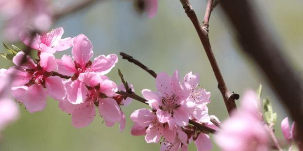 Frühlingsgedichte