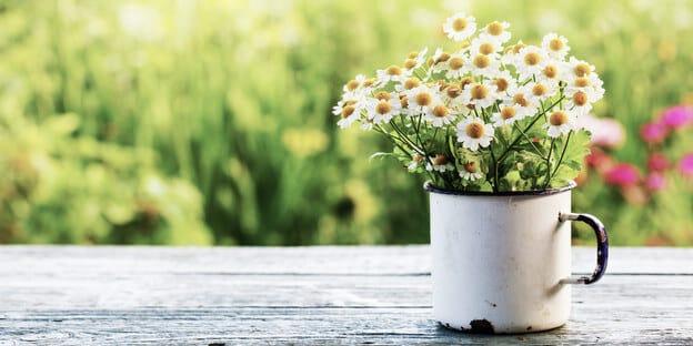 Margeriten im Frühling